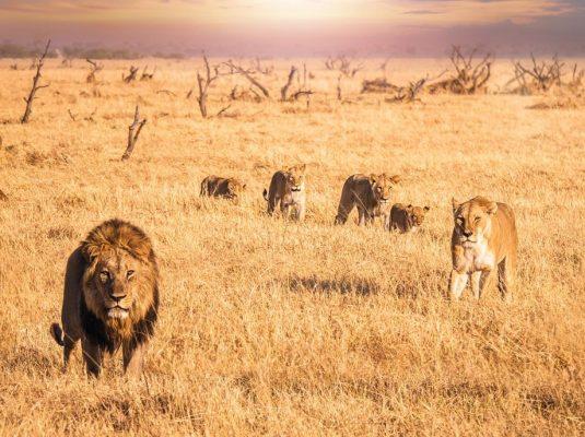 safari1-min
