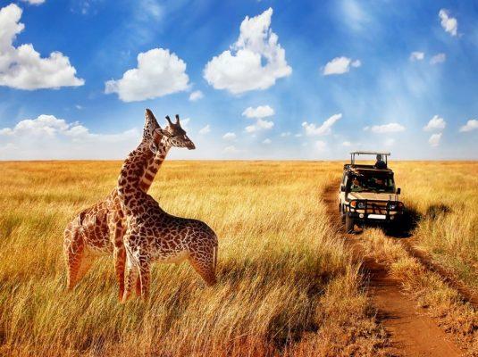 safari2-min